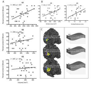 Visual working memory capacity is predicted by anatomical properties of V1.